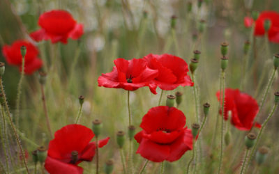 Songs, poems commemorate 100th anniversary of the end of WWI